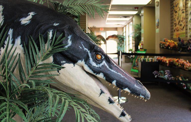 Dinosaur_Museum_Attraction_Branson_MO